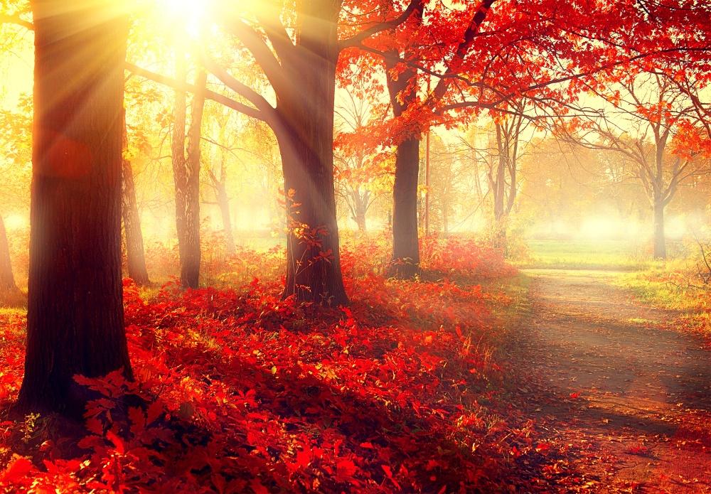 Návrat k přírodě – síla stromů