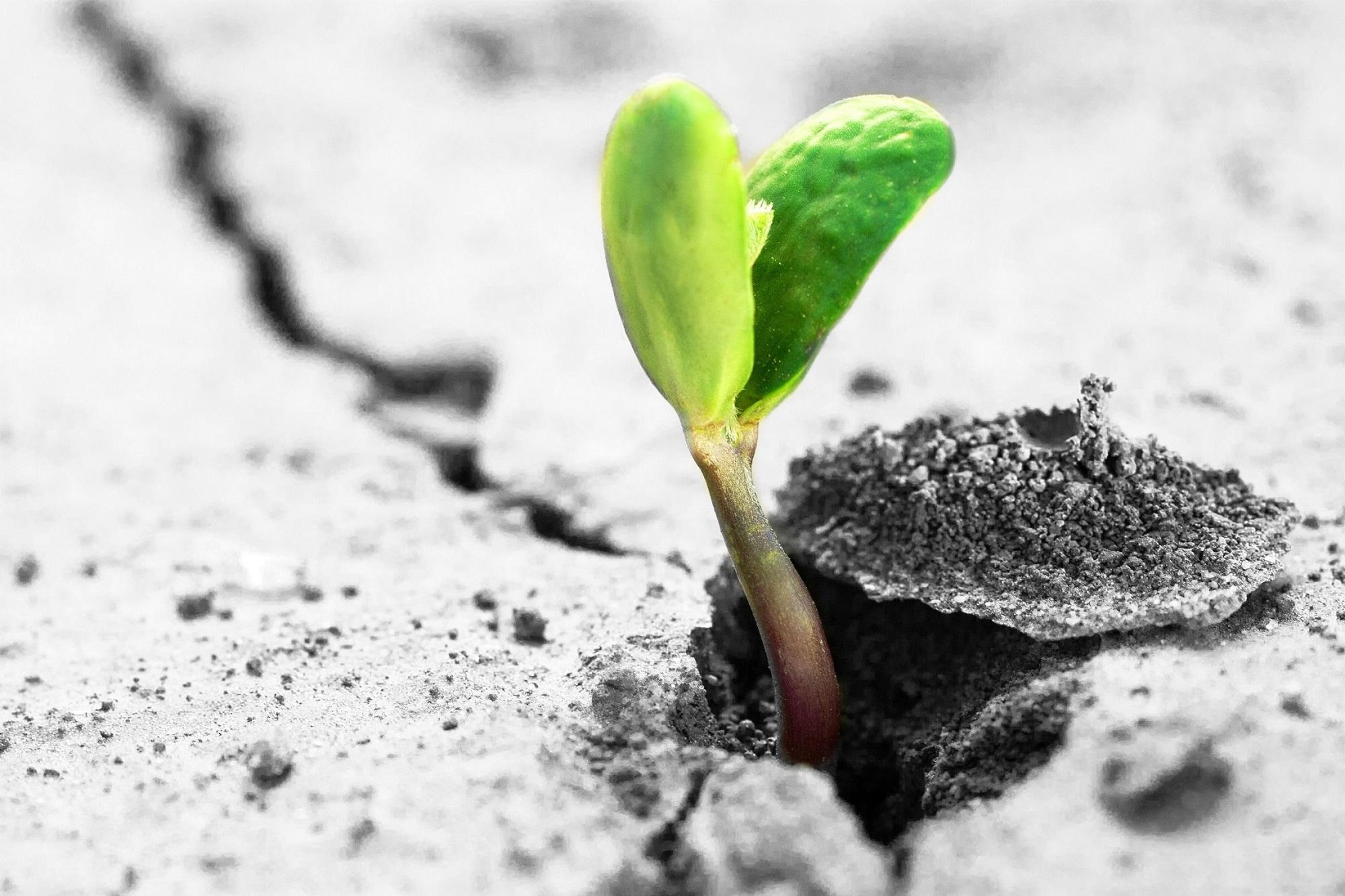 Pusťte do sebe nové energie jara